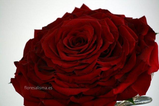Ramo de novia - Flores Alisma - Rosmelia Roja