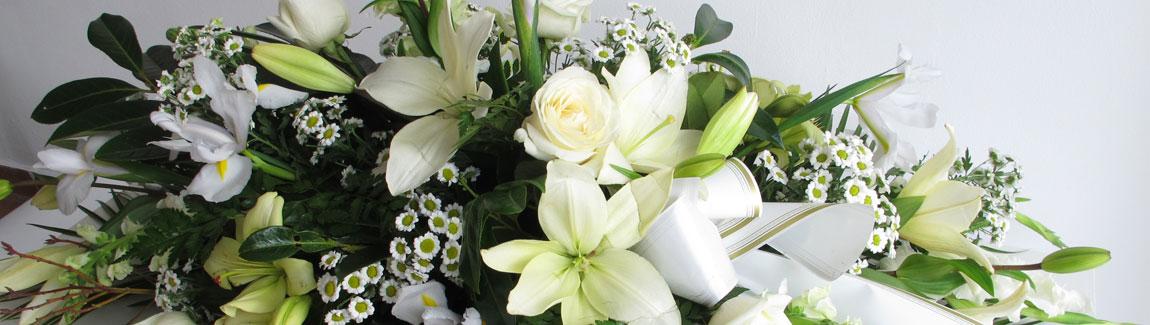 Flores Alisma