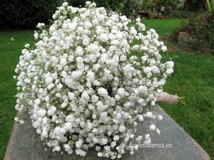 Ramo de novia. Flores Alisma - Avilés - Bouquet de paniculata