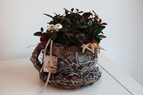Flores Alisma - Gaultheria con taza  - Flores Alisma