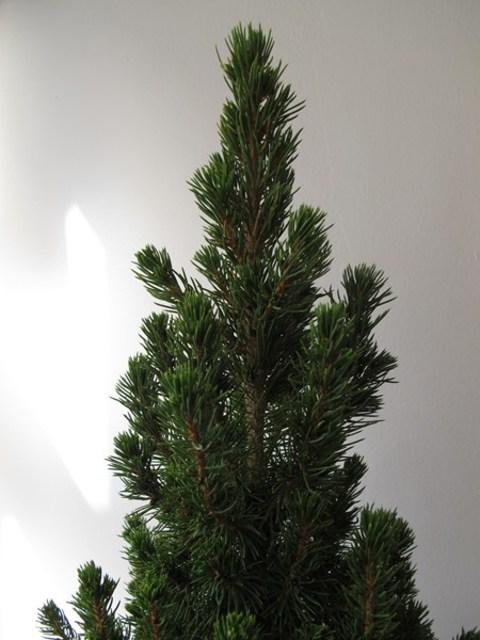 Flores Alisma - Soluciones de Flores Alisma de Avilés para no desaprovechar el árbol de Navidad - Flores Alisma