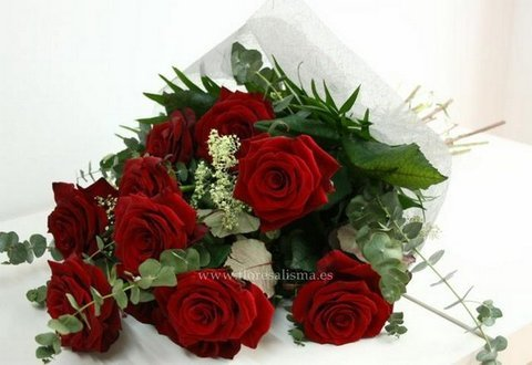 Flores Alisma - Como cuidar un ramo de rosas - Flores Alisma