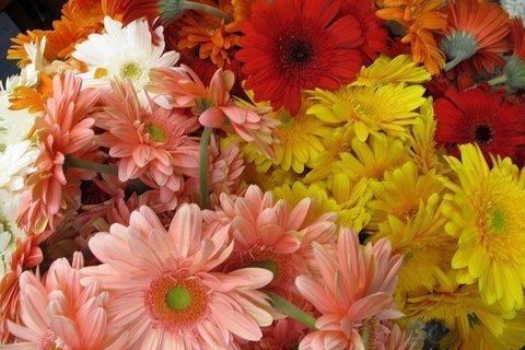 Flores Alisma - ¿Te gustaría saber el significado de los colores de las flores? - Flores Alisma