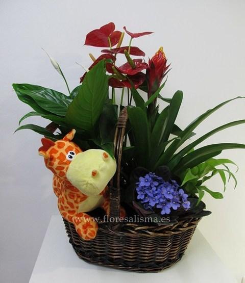 Flores Alisma - Cesta de plantas con peluche  - Flores Alisma