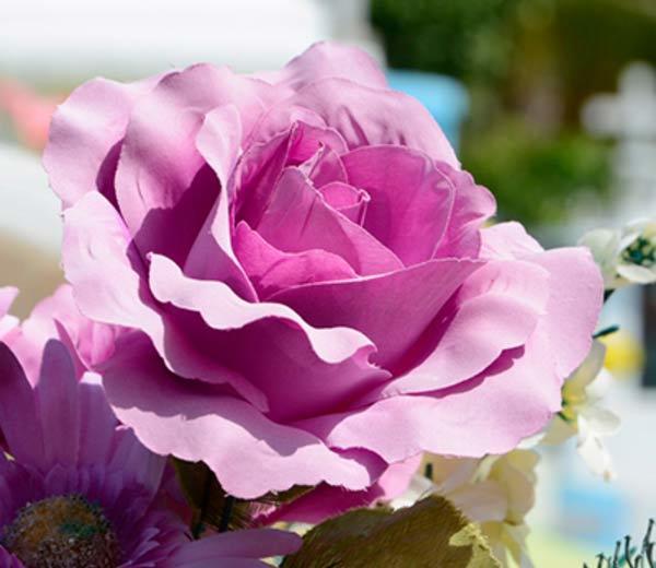 Flores Alisma - Funerario - Flores Alisma